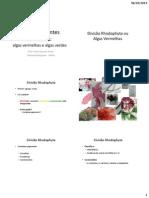 Tema 6 - Algas Vermelhas e Algas Verdes.pdf
