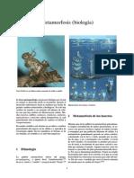 Metamorfosis (biología).pdf