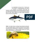 ATUN-animales.docx