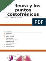 La Pleura y los puntos costofrénicos.odp