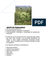 FORRAJERAS EN COLOMBIA.docx