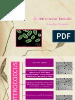 Enterococcus faecalis.pptx