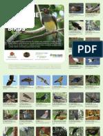 sc birds selection1