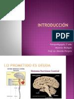 2012desarrolloontogenico-filogenicos-120402090114-phpapp02.ppt