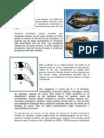 Reproduccion DEL CAMARON DE RIO.docx