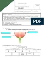 prueba ciencias naturales primera unidad tercero 2014 luz y sonido.doc