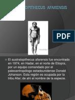 Australopithecus  Afarensis.pdf