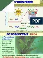 FOTOSINTESIS 3.ppt
