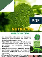 Capitulo 5 nutricion mineral.pptx