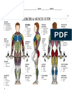 Exercise & Muscle Guide
