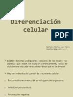 diferenciacion celular.pdf