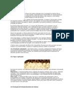 Papel e Celulose.docx