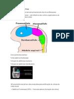 TRABALHO PRONTO.doc