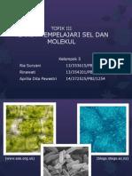 Teknik Mempelajari Sel & Molekul