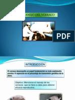 78482993-Manejo-Del-Verraco-Final.ppt