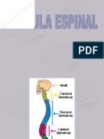 Médula espinal.ppt