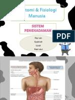 anatomifisiologimanusia-pencernaan-120923110823-phpapp02