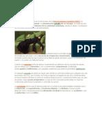 ALTERACIONES DE LA VOLUNTAD- ABULIA.docx