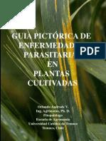 Guia pictorica de enfermedades en vegetales.pdf