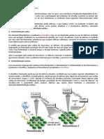 A Etapa Fotoquímica da Fotossíntese.docx