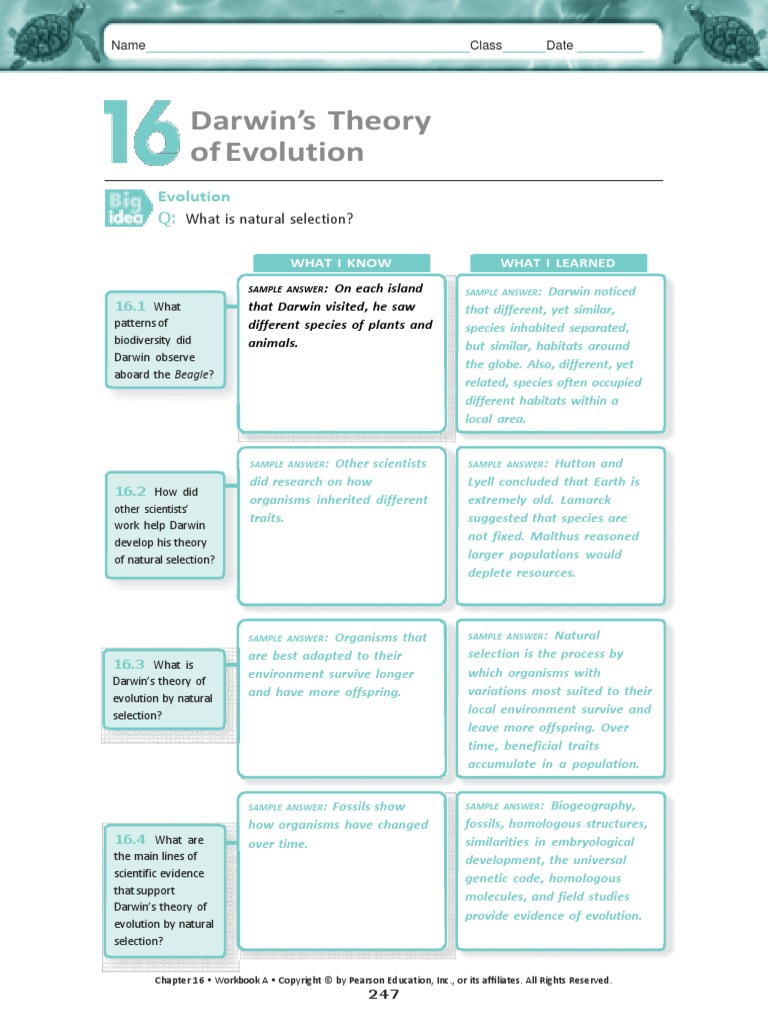 Answer the Charles Darrin Packetdocx Natural Selection – Natural Selection Worksheets
