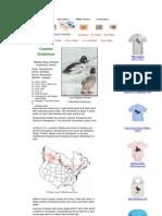 Common Goldeneye.pdf