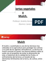 Cubierta vegetal (1).pptx