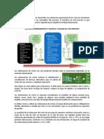 PARTE HH - 7.2 ESTIMAR LOS COSTOS.docx