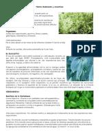 Plantas Medicinales y aromáticas.docx