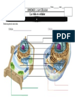 cell diagram  labeling in color.doc
