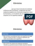 Glándulas.pptx