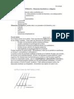 ESTRUCT BACTERIA APUNTES.pdf