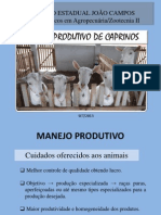 Manejo Produtivo.pdf
