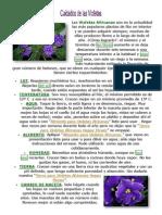 violetas africanas.docx