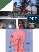 Gráficos de irrigación de cabeza y cuello.ppt