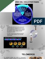 Proteínas reguladoras del ciclo celular (1).pptx