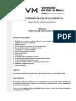 DISECCIÓN DE ENCÉFALO DE RES práctica completa.pdf