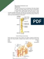 Memahami dan menjelakan anatomi Os Femoris.docx