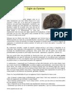 Fosilizacion.pdf