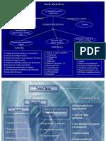 B-Resumen teorias-administrativas.ppt