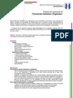 Práctica de Laboratorio7 Biologia.docx