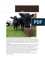 Vaca Transición seca y Primer Plano Nutrición Minerales y.pdf