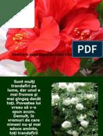 Legenda trandafirului Japonez.pps