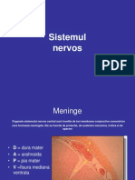 2.tesut nervos