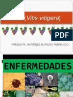 EXPOSICION DE ENFERMEDADES DE VID.pptx
