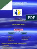ESTRUCTURA Y CONCEPTOS.pdf