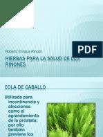 Hierbas para la salud de los riñones.pptx