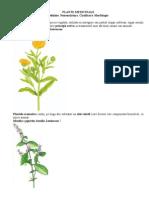 Plante Medicinale Si Morfologia Lor