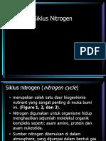 Siklus Nitrogen