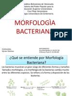 MORFOLOGÌA BACTERIANA.pptx